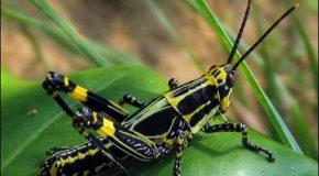 Incroyable, superbe et adorable présentation avec des clichés d'insectes