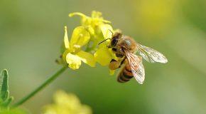 Très belle documentation sur la vie des abeilles