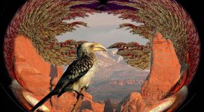 Les plus beaux oiseaux du monde dans des décors avec de sublimes paysages