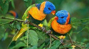 Les oiseaux du Brésil, des animaux au charme incomparable!