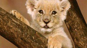 Sublimes clichés d'animaux et le plein de conseils pour une vie meilleure