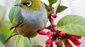 Les plus adorables des oiseaux d'Australie plus une musique relaxante