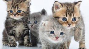 Des chatons, des vœux et une nouvelle année déjà oubliée!