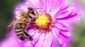 Les abeilles, toute une histoire que chacun devrait connaître!