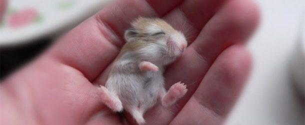 Les bébés animaux les plus mignons du monde.