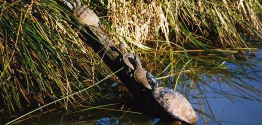 Balade dans la réserve naturelle du marais d'Orx en France