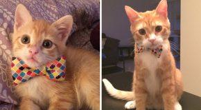 Photos de chats, jeunes et quelques années plus tard.
