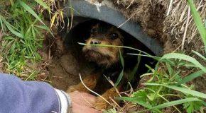 Un couple sauve une chienne trouvée et l'adopte pour la vie.