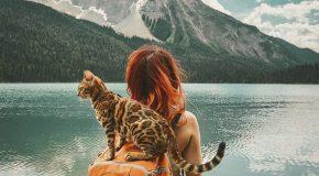 Un chat voyage avec ses maîtres et il est devenu une star sur le Web