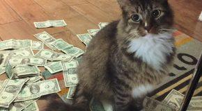 Un chat vole de l'argent pour le donner aux SDFs