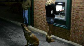 Des chiens comme gardiens aux guichets automatiques