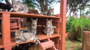 Un paradis rien que pour les chats, il se trouve à Lanai à Hawaii
