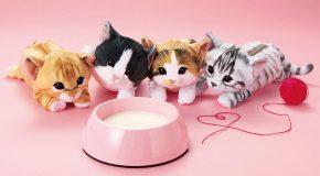Ces chatons ne sont pas des peluches, mais des trousses!
