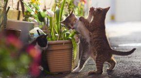 Les chats karatékas capturés en image par un photographe Japonais