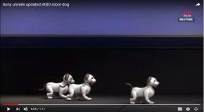 Sony Corp présente Aibo, un robot-chien très intelligent!