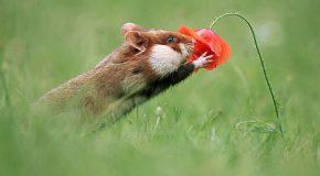 Des hamsters heureux dans la nature,  c'est beau la liberté!