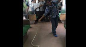 Un serpent dans un train parmi les voyageurs, une panique de courte durée!