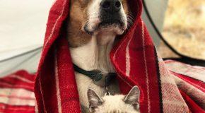 Un chat et un chien sauvés d'un refuge vivent une belle amitié en plein air!