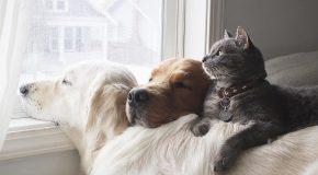 Deux chiens et un chat, trois amis très complices en tout!