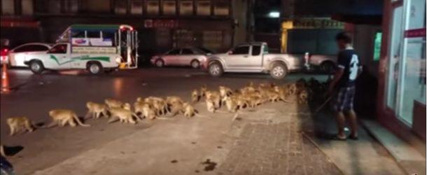 Des singes paniquent devant les feux d'artifices lors de la fête des pères