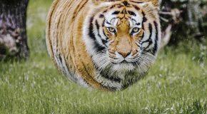 Des animaux tous ronds, des créations sorties de Photoshop