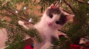 Les chats et les chiens s'expriment en période de fin d'année!