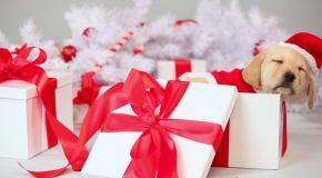 Cadeaux de Noël pour enfants et pour animaux!