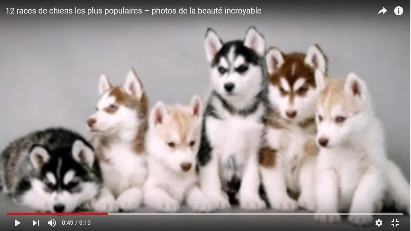 Site de rencontre gratuit pour amoureux des animaux