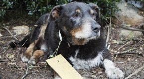 Un chien sauve un autre chien et revient chez lui après des heures d'absence