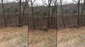 Deux chiens tentent de garder le sapin de Noël, mais papa refuse!