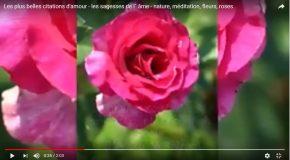 Citations sur l'amour avec de si jolies fleurs