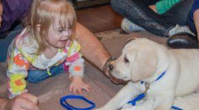 Un chien d'alerte sauve la vie de sa protégée à 8 kilomètres de distance