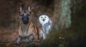 Une photographe capture l'amitié insolite entre son chien et ses hiboux