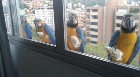 Des animaux aux fenêtres, des scènes qui plaisent, mais qui sont aussi très malheureuses!
