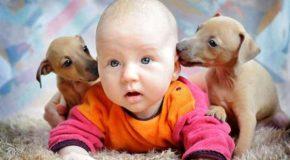 Des bébés avec des chiots, des moments trop beaux