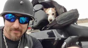 Un motard récupère un chien jeté sur la route et c'est une nouvelle aventure pour eux!