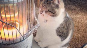 Les chats et le chauffage, en période de grands froids, c'est si mignon!