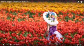 Les plus belles fleurs du monde dans une très belle présentation