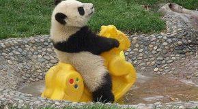 Des animaux incroyablement drôles et mignons!