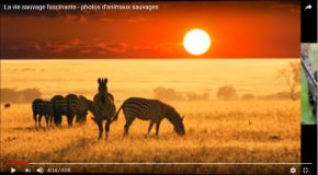 Les animaux sauvages dans de superbes clichés qui font du bien!
