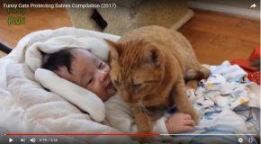 Des chats en admiration devant le bébé de la famille