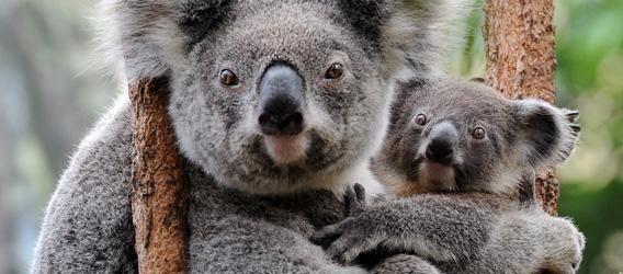 Les animaux, ces compagnons qui nous rendent heureux!