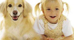 Similitudes entre bébés et chatons, enfants et chiens…