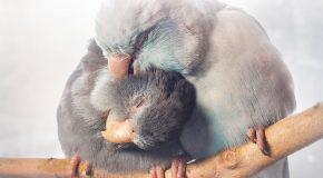 Les oiseaux peuvent aussi être d'excellents animaux de thérapie!