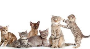 Sans les chats, l'humain ne serait jamais heureux! Vrai ou faux?