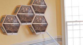 BEEcosystem, la ruche qui s'installe dans la maison des humains