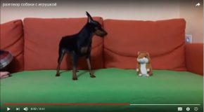 Un chien intrigué devant une peluche qui aboie comme lui