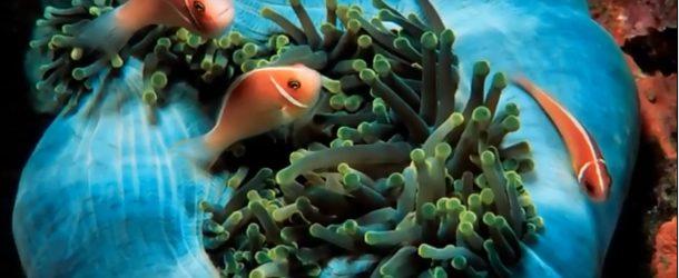 Les plus beaux animaux et paysages marins, c'est super comme découverte!