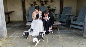 Des mariés avec des chiots comme bouquet de fleurs, c'est beau et insolite!