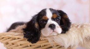Les chiots, les plus beaux bébés du monde animal